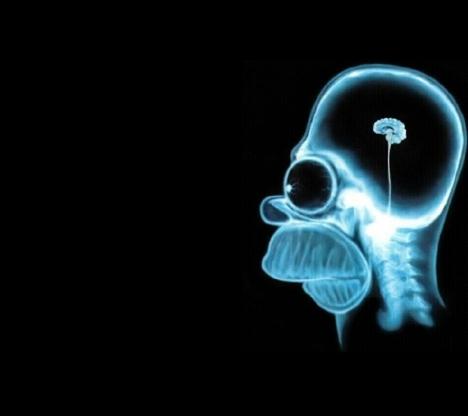 homer simpson brain